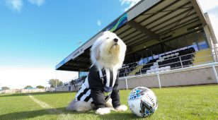 The Dulux dog at Ashington Football Club.