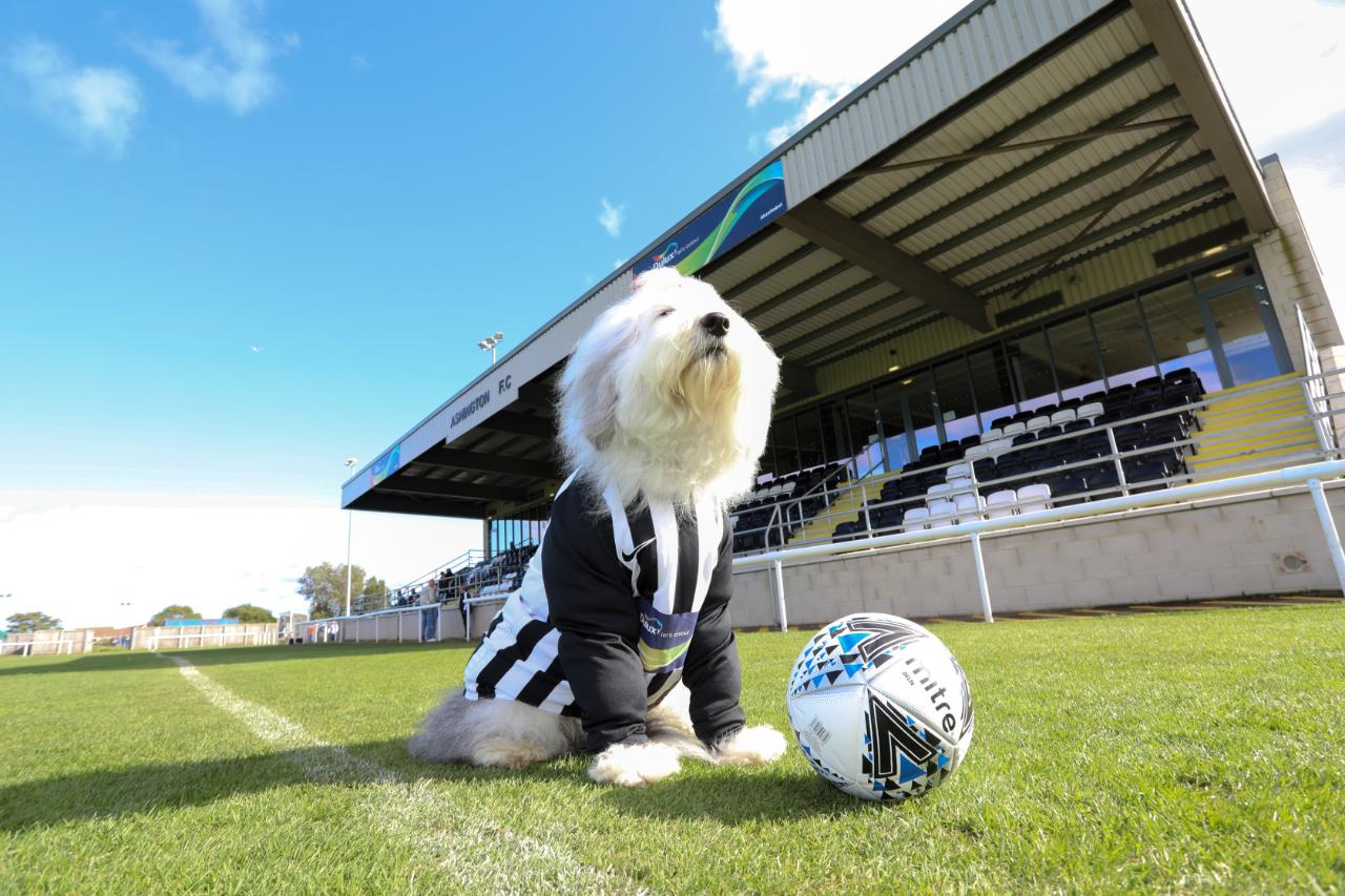 The Dulux dog at Ashington Football Club.